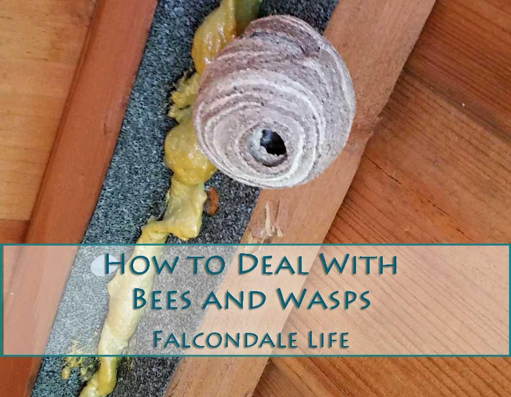 How to deal with bees and wasps around the home – my experiences