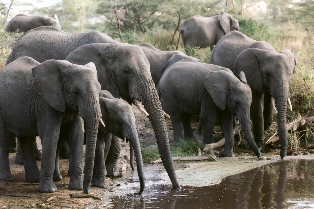 35mm SLR photo Herd of elephants on FalcondaleLife blog
