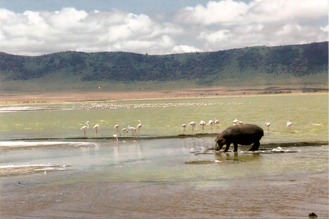 35mm SLR photo of hippo and flamingos on FalcondaleLife blog