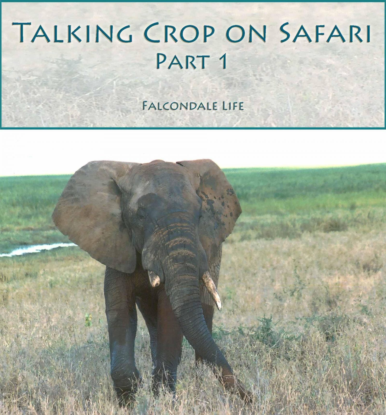Don't talk so much crop on Safari on Falcondale Life blog. What lenses to take on safari. Photography tips.