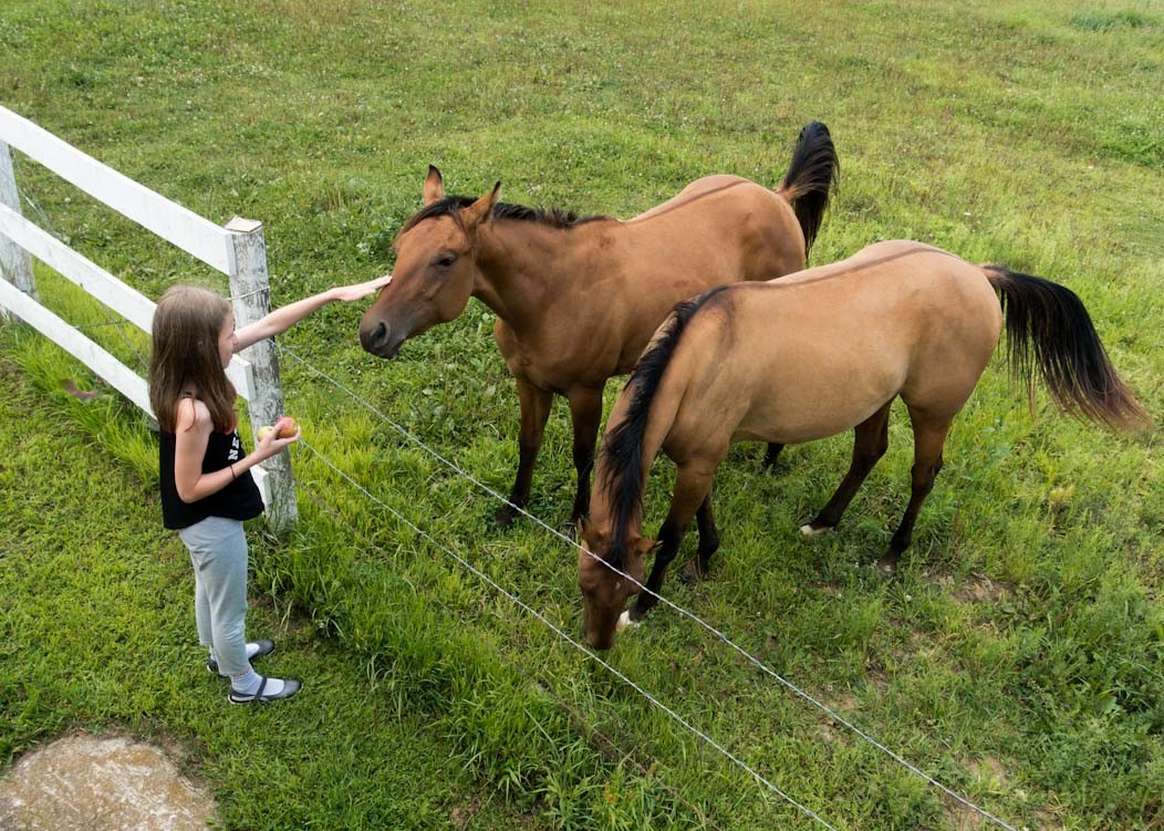 How we planned our American Midwest road trip on Falcondale Life. A route from Minneapolis to Nebraska and Iowa taking in the Trout Trail cycle route and the Spam Museum. Wild west ponies.