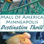 Mall of America, Minneapolis: Destination Thrill on FalcondaleLife blog. The biggest shopping mall in America also has a theme park and many other thrilling attractions to make it a tourist destination in its own right. Nickelodeon Universe theme park has 27 thrill rides. The Sea Life Aquarium includes a shark tank tunnel to walk through. There are two mini golf experiences and all of these are reviewed in the blog post. Also, can we talk about how this fish looks like Donald Trump? Or Elvis?