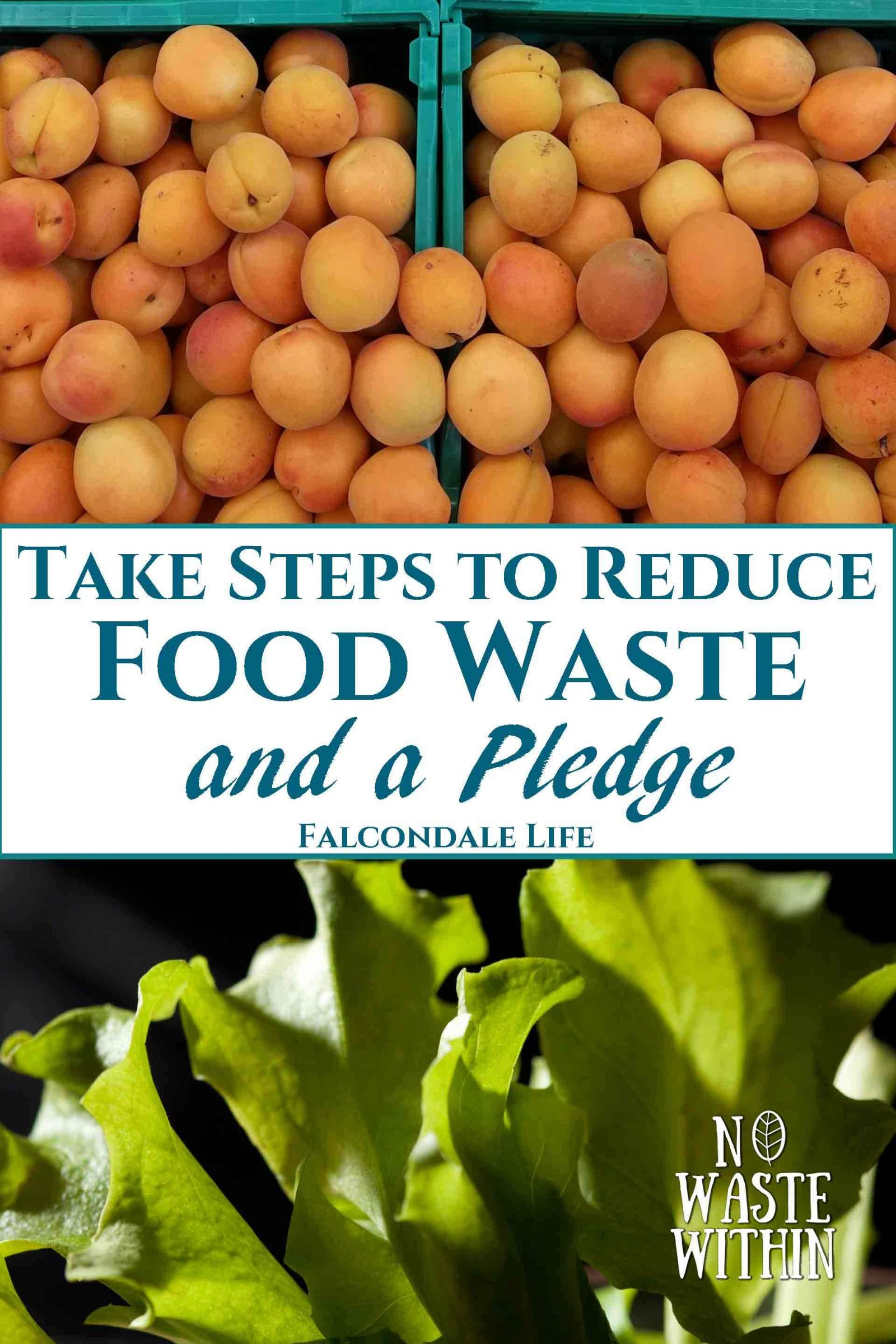 Take Steps to Reduce Food Waste – and a Pledge