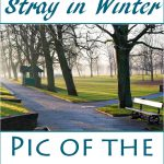Pic of the week - Harrogate Stray in Winter on Falcondale Life blog. The low winter light casts nice shadowns across the ground and the wide promenades and victorian architecture mean that it's a great place to visit for a photo walk.