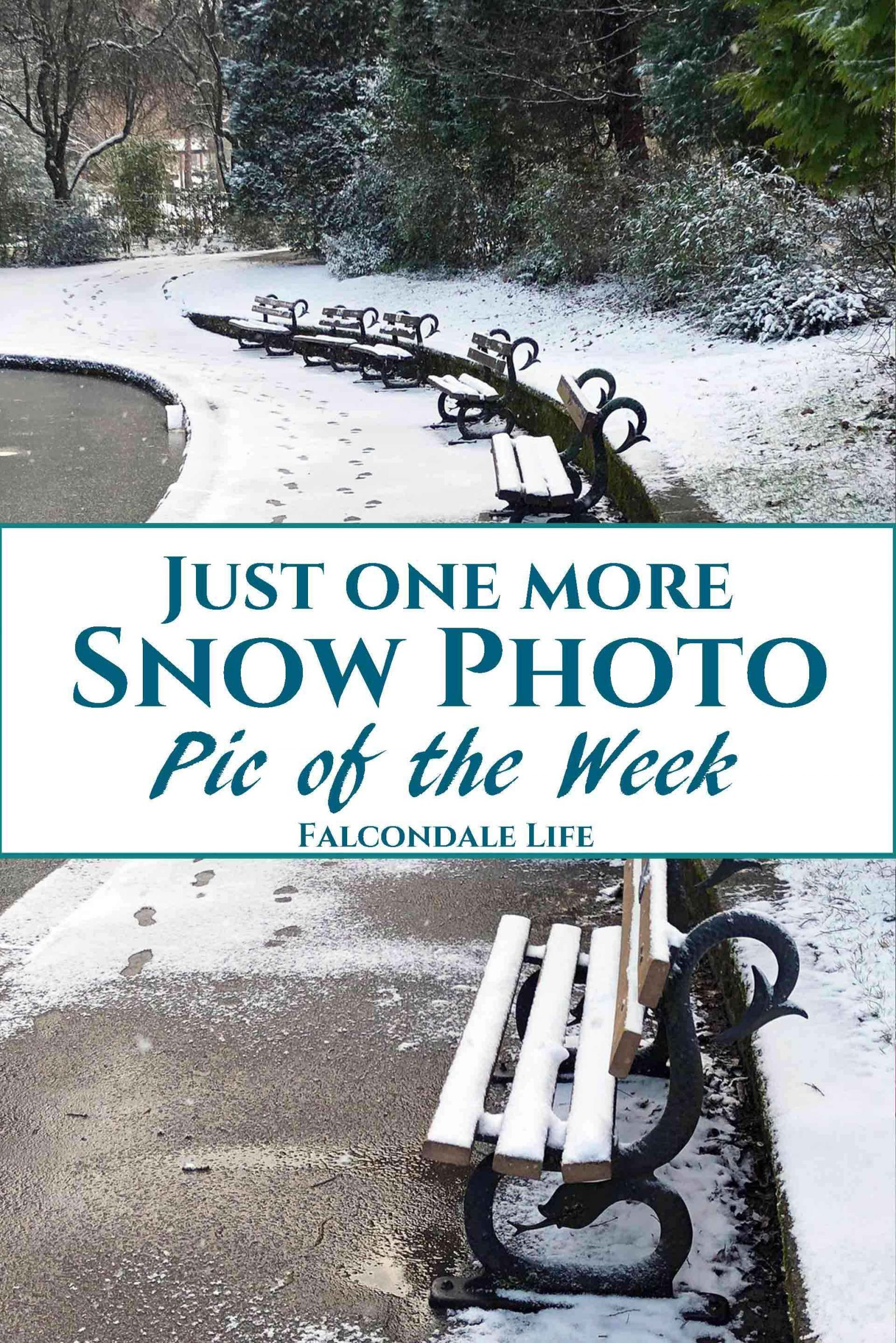 Just one more Snow Photo – Pic of the Week
