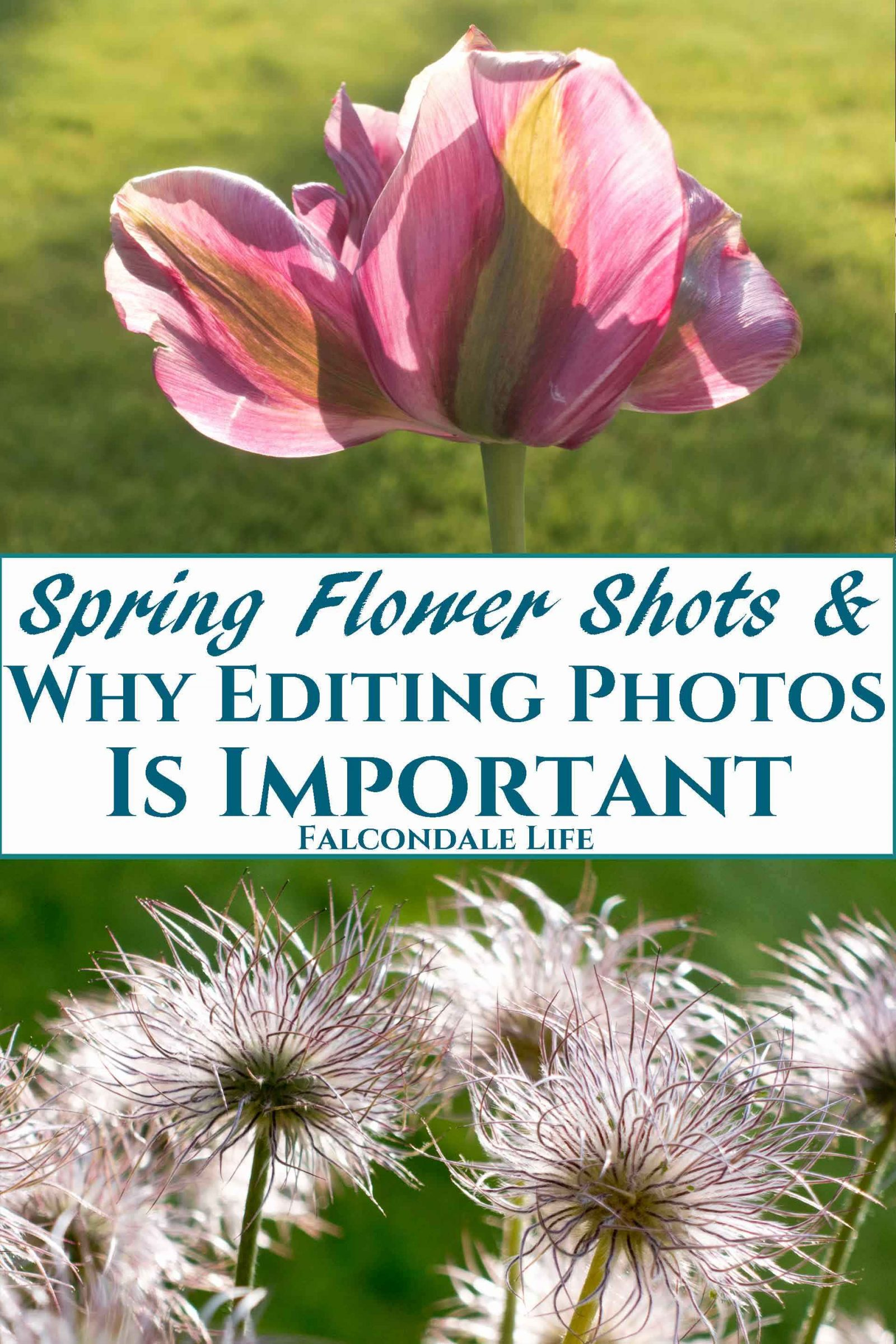 More Spring Flower Shots and Why Editing Photos is Important